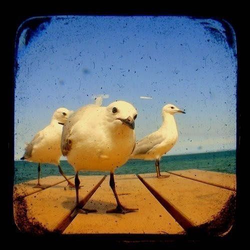 Seagull Photo Print 5x5 TtV Bird Photography - Blue - Wildlfie - Nature - Animal - Wall Decor